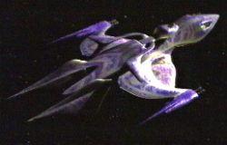 The Ranger White Star